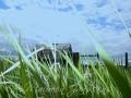 Wild Grasses!